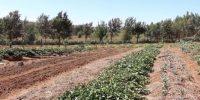 Nourishing the world organically - The Story of Sylvia Kuria! - projeto Europa no Mundo