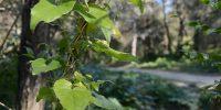 À descoberta da biodiversidade da Quinta das Conchas