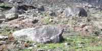 Plantação de 450 carvalhos no Gerês