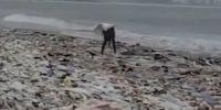 Maior Projeto De Limpeza de Praia do Mundo!